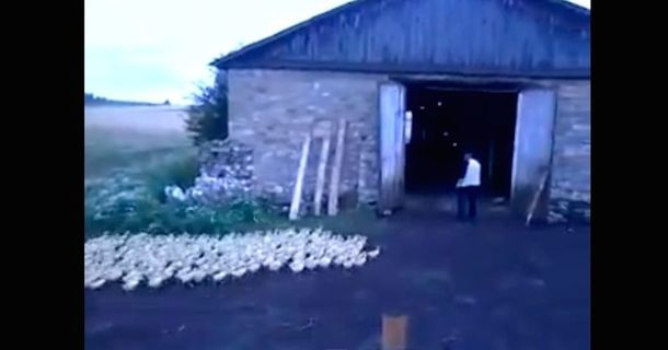 Bare-Chested Russian Man Is The Master Of All Ducks.
